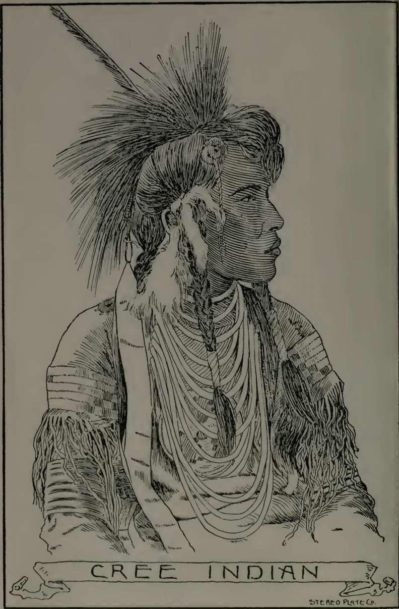 Cree Indian Tattoos